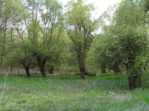 Šume vlažnih staništa